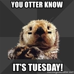 Roller Derby Otter - You otter know  it's Tuesday!
