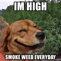 dogweedfarm - Im High smoke weed everyday