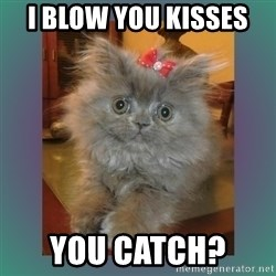 cute cat - I blow you kisses  You catch?
