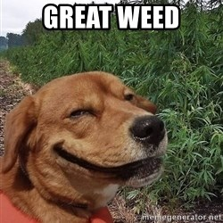 dogweedfarm - Great weed