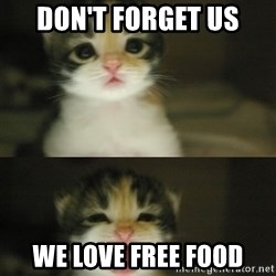 Adorable Kitten - don't forget us we love free food
