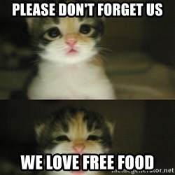 Adorable Kitten - Please don't forget us we love free food