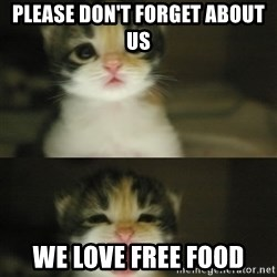 Adorable Kitten - please don't forget about us We love free food