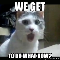 Surprised Cat - WE Get to do what now?