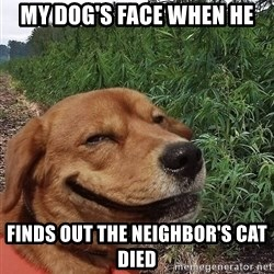 dogweedfarm - My Dog's face when he finds out the neighbor's cat died