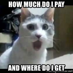 Surprised Cat - HOW MUCH DO I PAY AND WHERE DO I GET