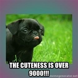 derp -  The cuteness is over 9000!!!