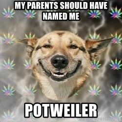 Stoner Dog - my parents should have named me potweiler