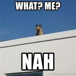 Roof Dog - What? me? nah