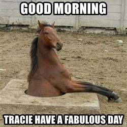 Hole Horse - Good morning  Tracie have a fabulous day