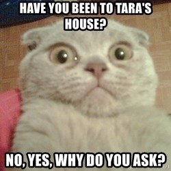 GEEZUS cat - have you been to Tara's house? No, yes, why do you ask?