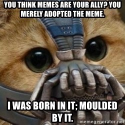 bane cat - You think memes are your ally? You merely adopted the meme. I was born in it; moulded by it.