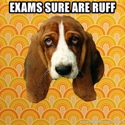 SAD DOG - Exams sure are ruff