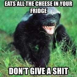 Honey Badger Actual - Eats all the cheese in your fridge don't give a shit