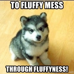 Baby Courage Wolf - to fluffy mess through fluffyness!