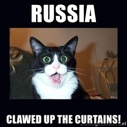 shocked cat - Russia Clawed up the curtains!