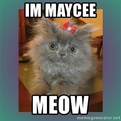cute cat - im maycee meow