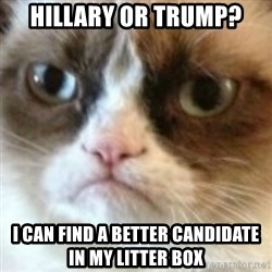angry cat asshole - Hillary or Trump? I can find a better candidate in my litter box