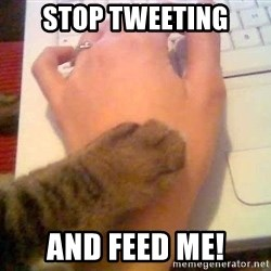 It's time to stop cat - STOP TWEETING AND FEED ME!