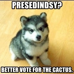 Baby Courage Wolf - presedindsy? better vote for the cactus.