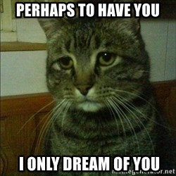 Depressed cat 2 - perhaps to have you  I only dream of you