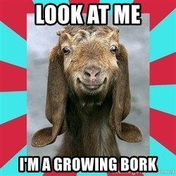 Gloating Goat - Look at me I'm A Growing Bork