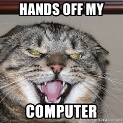 Angry Cat - hands off my  computer
