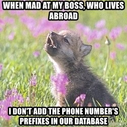Baby Insanity Wolf - When mad at my boss, who lives abroad  I don't add the phone number's prefixes in our database
