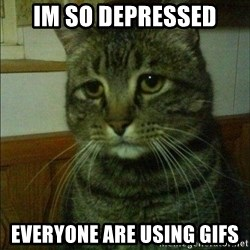 Depressed cat 2 - im so depressed everyone are using gifs