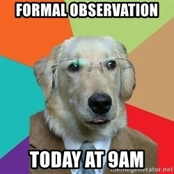 Business Dog - Formal observation  today at 9am