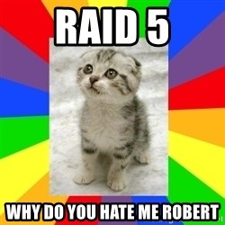 Cute Kitten - Raid 5 why do you hate me Robert