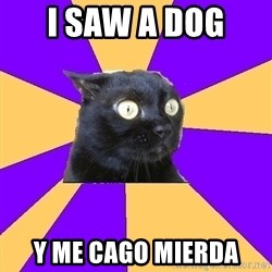 Anxiety Cat - I saw a dog  Y me cago mierda