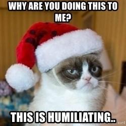 Grumpy Cat Santa Hat - Why are you doing this to me? This is humiliating..