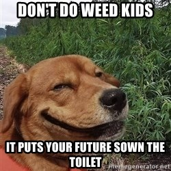 dogweedfarm - Don't do weed kids It puts your future sown the toilet