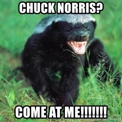 Honey Badger Actual - Chuck Norris? COME AT ME!!!!!!!