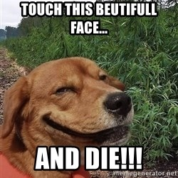 dogweedfarm - touch this beutifull face... and die!!!