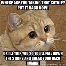 motherfucking game cat - WHERE ARE YOU TAKING THAT CATNIP? PUT IT BACK NOW! OR I'LL TRIP YOU SO YOU'LL FALL DOWN THE STAIRS AND BREAK YOUR NECK HUMAN!
