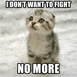 Can haz cat - I don't want to fight no more