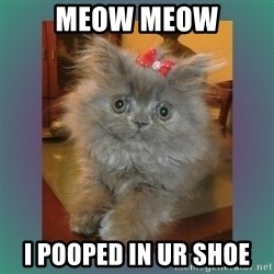 cute cat - meow meow i pooped in ur shoe