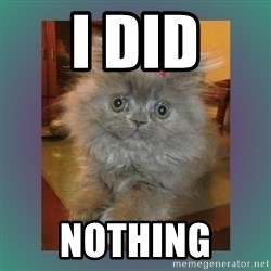 cute cat - I did Nothing