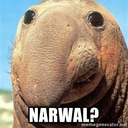 Lolwut -  Narwal?