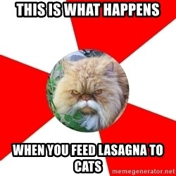 Diabetic Cat - This is what happens when you feed lasagna to cats