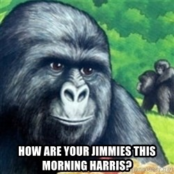 Jimmies Rustled -  How are your Jimmies this morning Harris?