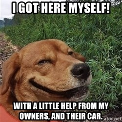 dogweedfarm - I got here myself! With a little help from my  owners, and their car.