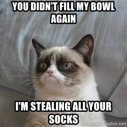 Grumpy cat 5 - YOU DIDN'T FILL MY BOWL AGAIN I'M STEALING ALL YOUR SOCKS