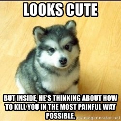 Baby Courage Wolf - Looks Cute But inside, he's thinking about how to kill you in the most Painful way possible.