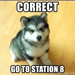 Baby Courage Wolf - Correct Go to station 8