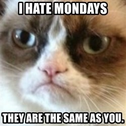 angry cat asshole - I hate Mondays They are the same as you.