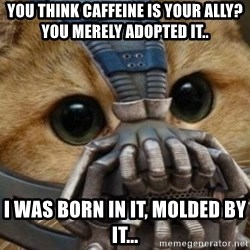 bane cat - You think caffeine is your ally? you merely adopted it.. I was BORN in it, MOLDED by it...
