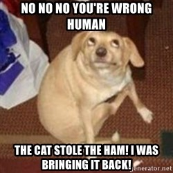 Oh You Dog - NO NO NO YOU'RE WRONG HUMAN THE CAT STOLE THE HAM! I WAS BRINGING IT BACK!